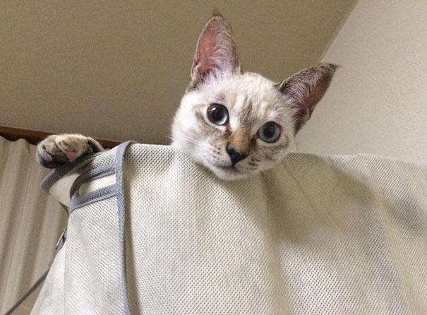 stray-cat-chooses-owner-vell-kawasaki-hina-17