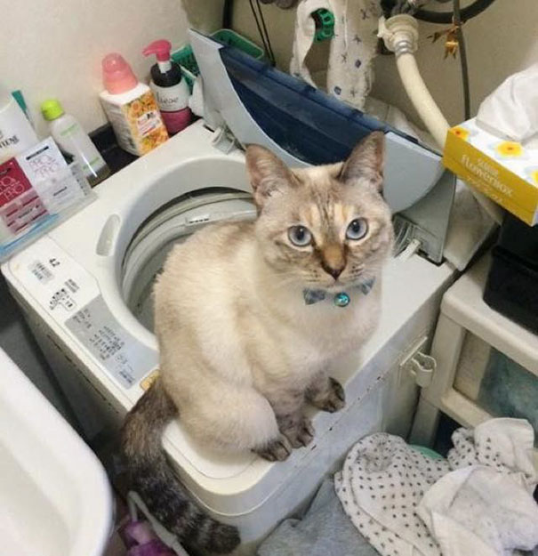 stray-cat-chooses-owner-vell-kawasaki-hina-45