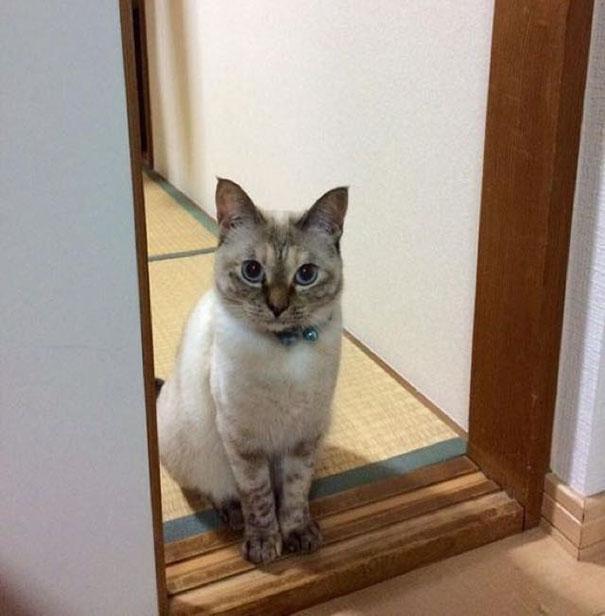 stray-cat-chooses-owner-vell-kawasaki-hina-47