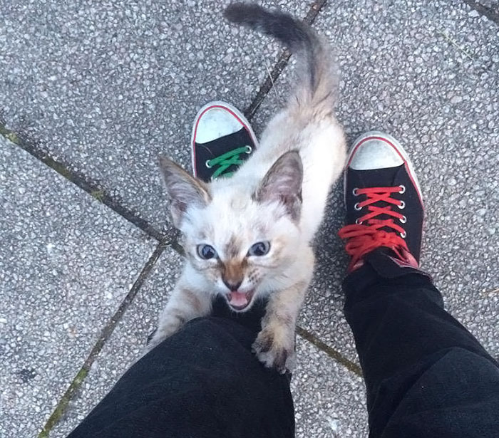 Stray Kitty Chooses His Human In A Park, Wouldn't Let Him Go