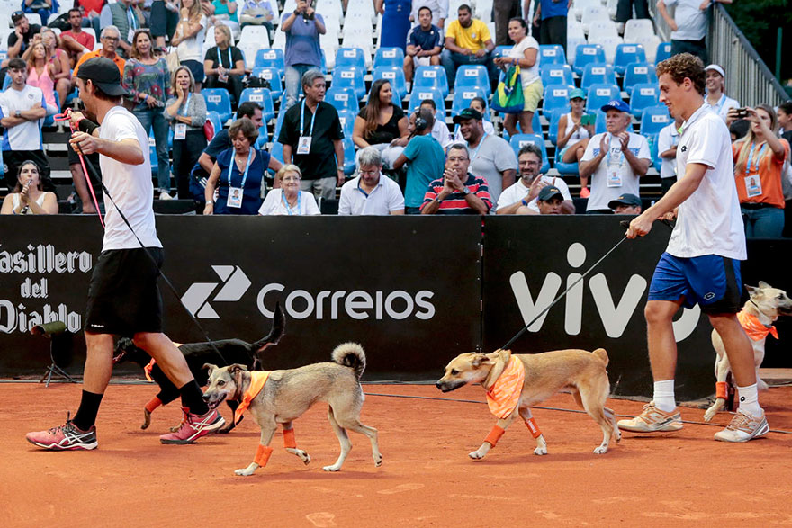 stray-dogs-tennis-ball-boys-brazil-open-tournament-1