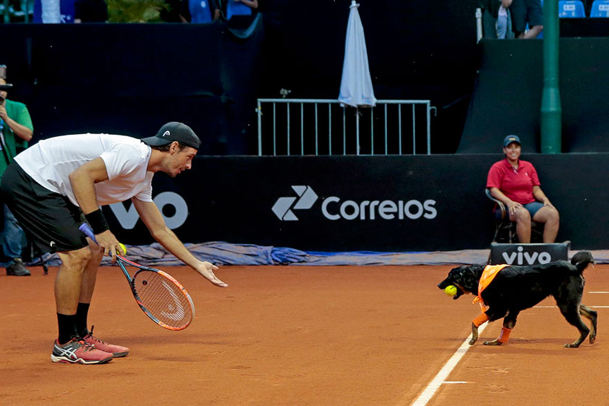 stray-dogs-tennis-ball-boys-brazil-open-tournament-2