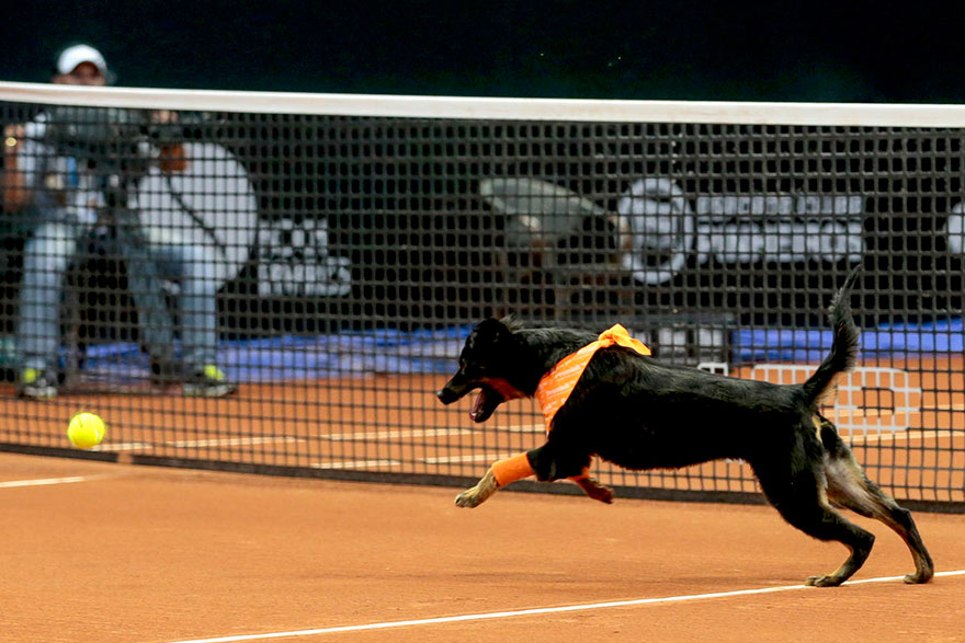 stray-dogs-tennis-ball-boys-brazil-open-tournament-8