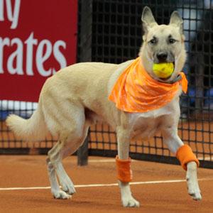 Shelter Dogs Serve As 'Ball Boys' At Brazil Tennis Open