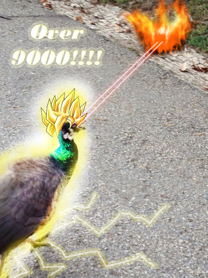 Over 9000