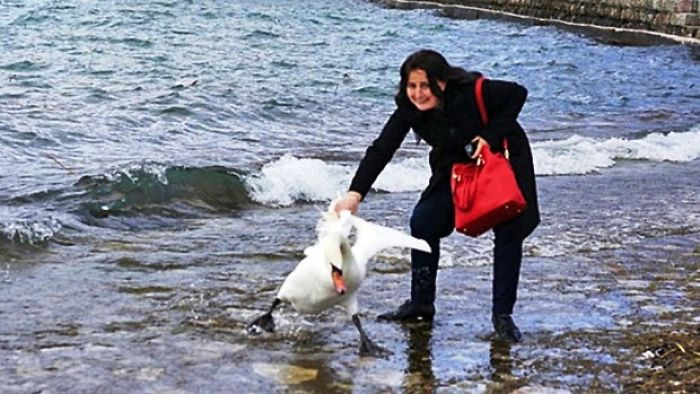 Terrified Swan Dies After Vacationer Drags It From Water For Selfie