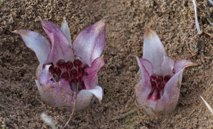 The Rarest Plants On Earth