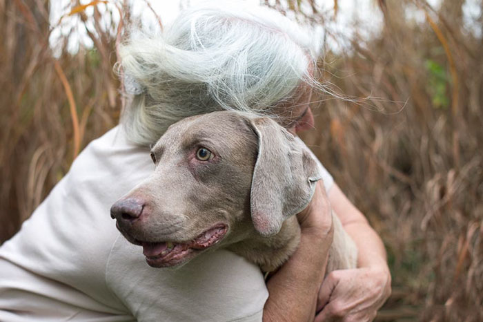 I Photograph The Special Bond Between Old Dogs And The People Who Love Them
