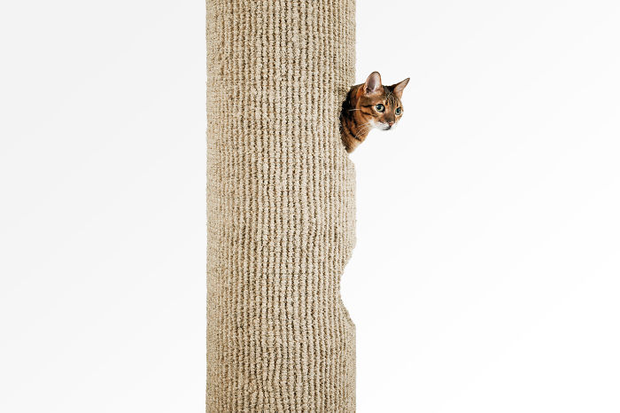 Top 10 Best Cat Trees In The Uk!!