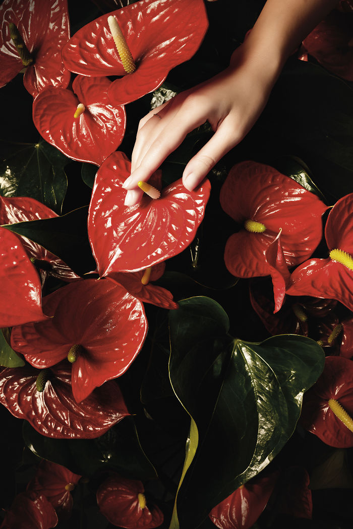 Touch Me, But Softly: Photo Series Of Flowers Delicately Touched By Female Hands
