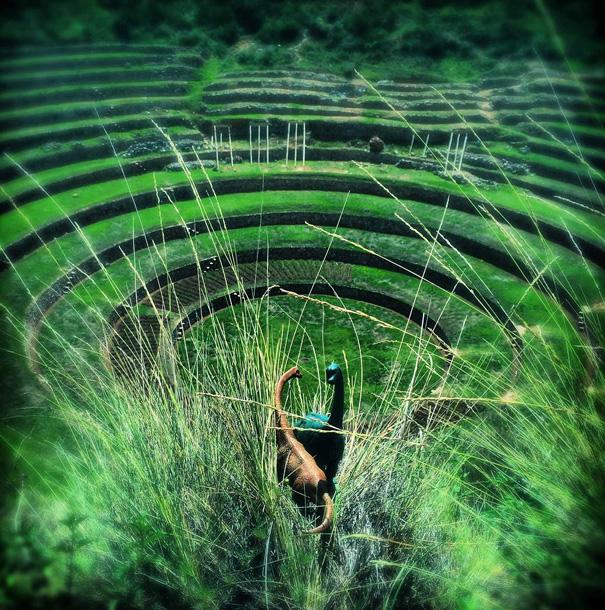 travel-photography-dinosaur-toys-dinodinaseries-jorge-saenz-177