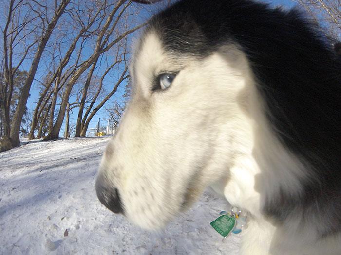 tula-the-dog-photographer-kim-otness-(1)