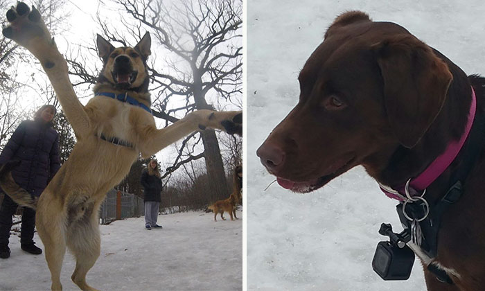 There Is A New Photographer In Town… And She's A Dog!