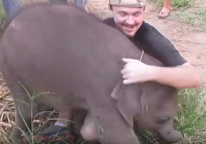 Video Shows Rescued Baby Elephant Gets Attached To Human