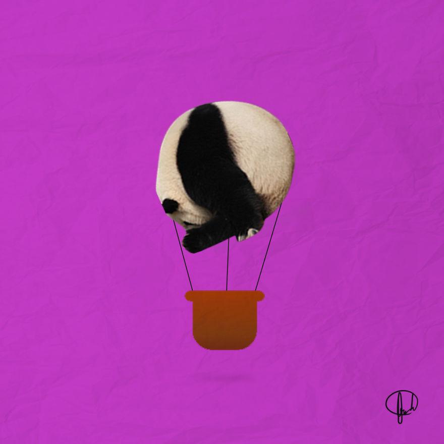 What If Pandas Were Round