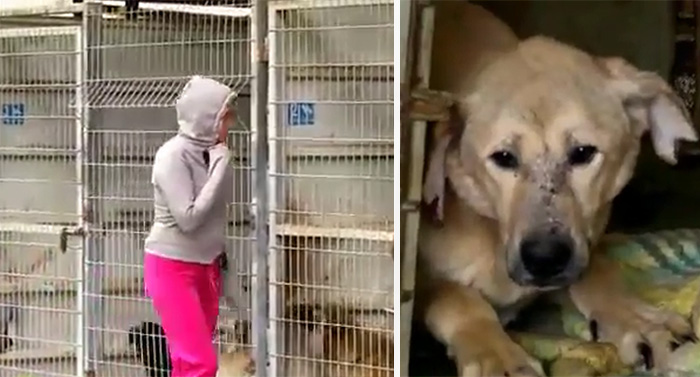 This Woman Couldn't Decide Which Dog To Adopt So She Bought The Entire Shelter