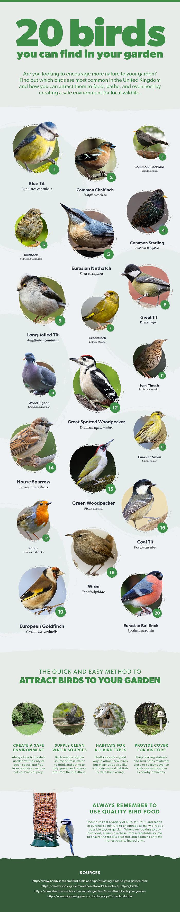 Most Common Garden Birds