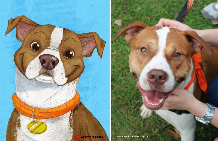 #adoptadoodle Project Draws Animals In Need Of Homes As Children's Book Illustrations
