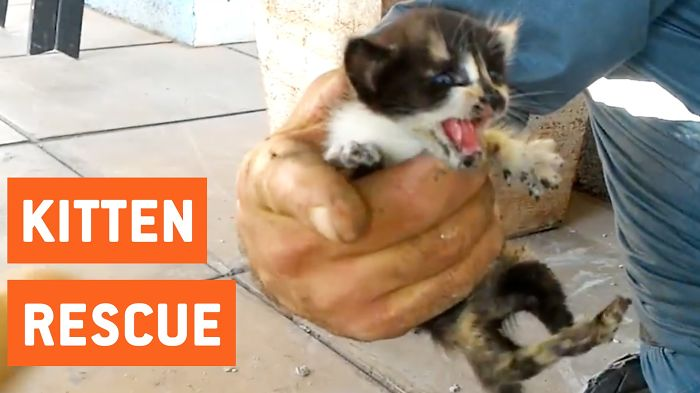 Kittens Rescued From Water Pipes