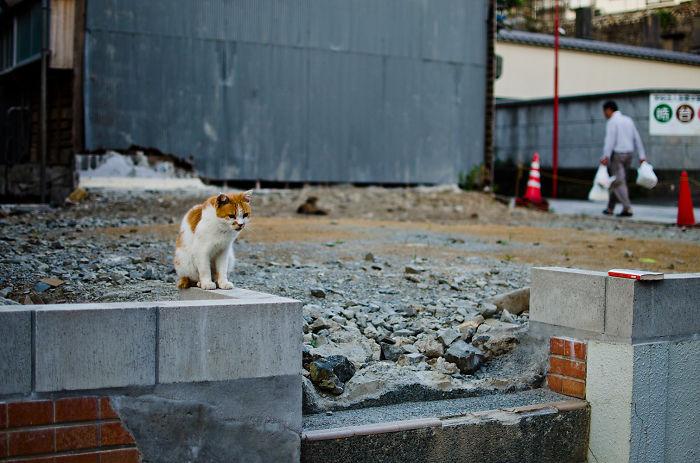 The Forgotten Cats Of Nagasaki.
