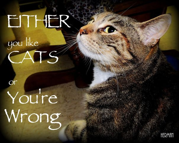Either-you-like-Cats-56fffc5d33989.jpg
