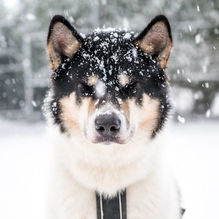 I Quit My Job To Go On Adventures With My Husky (Part 2)
