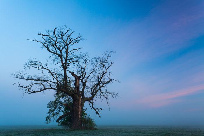 I Take Photos In A Land Of Magical Oaks In Rogalin, Poland