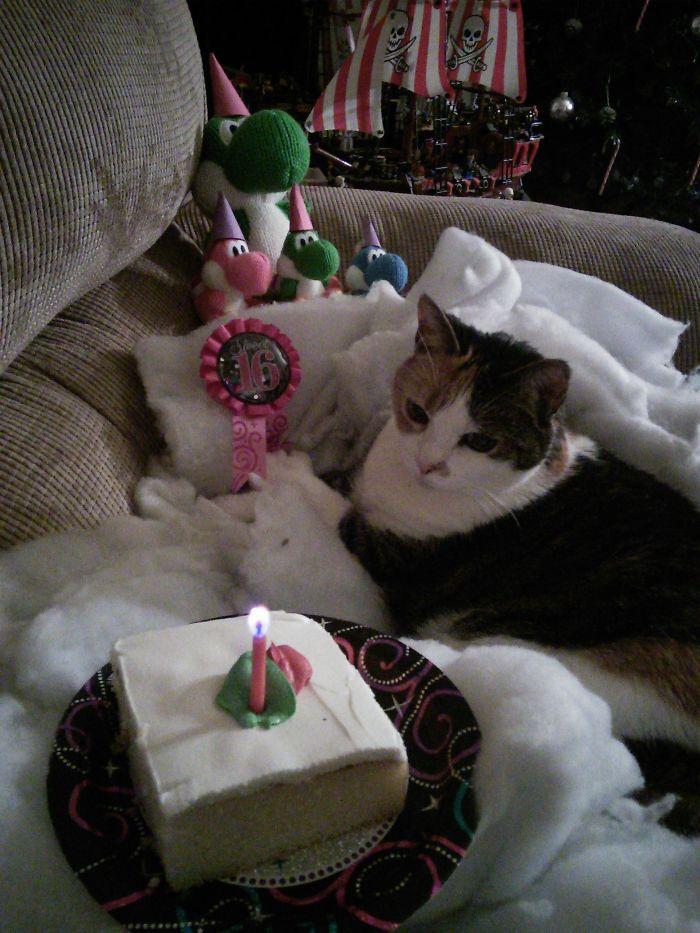 Kelakuan Para Kucing Yang Merayakan Ulang Tahun Petnyaku