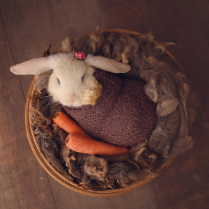 Newborn Session... With A Bunny!