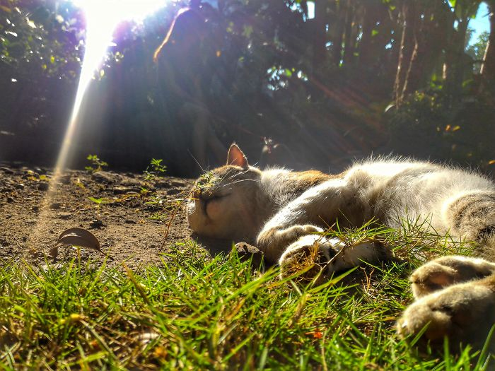 Cat And Sun