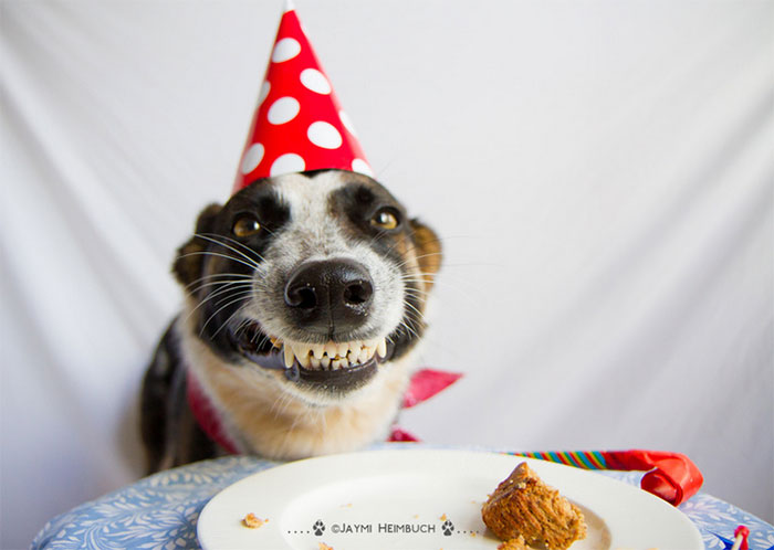 Happy Dog In A Party Hat