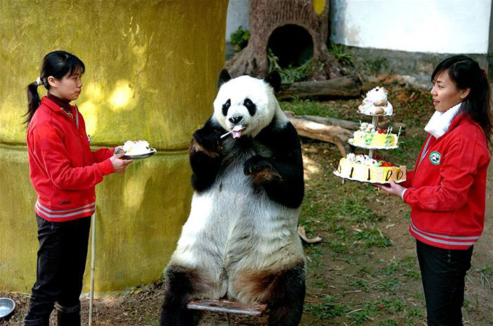 This Panda Learned Table Manners For This Moment