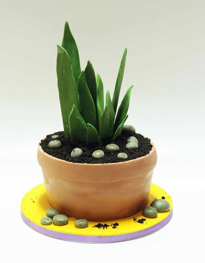 My Friend Loves Plants, So I Made Her This Fully Edible Plant Cake