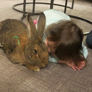 After The Death Of My Mother, I Discovered The Power Of Rabbit Therapy