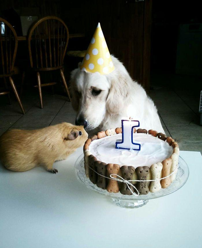 Our Golden Retriever Luna Was Celebraring Her First Birthday With Her Little Friend Vilma ;)