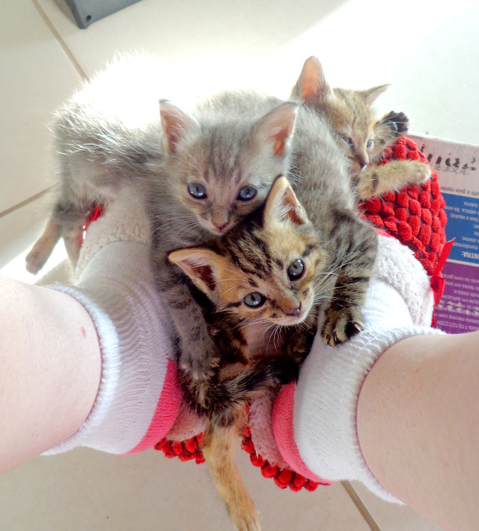 We Rescued 3 Abandoned Kittens And It Changed Our Lives