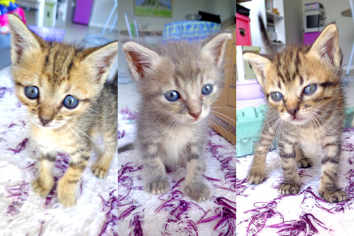 We Rescued 3 Little Kittens From Abandonment And It Changed Our Lives