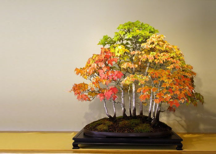 Bonsai Grove In Autumn