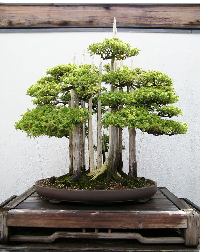 #6 Bonsai Forest
