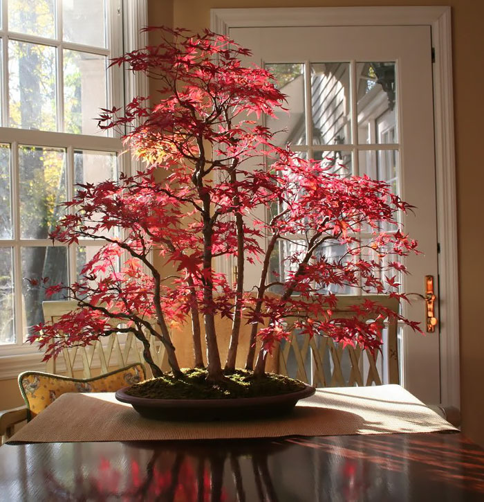 40 Of The Most Beautiful Bonsai Trees Ever Bored Panda