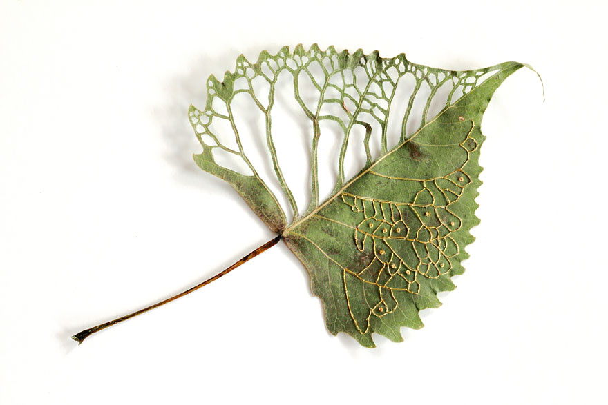 Embroidered Leaf Art By Hillary Fayle
