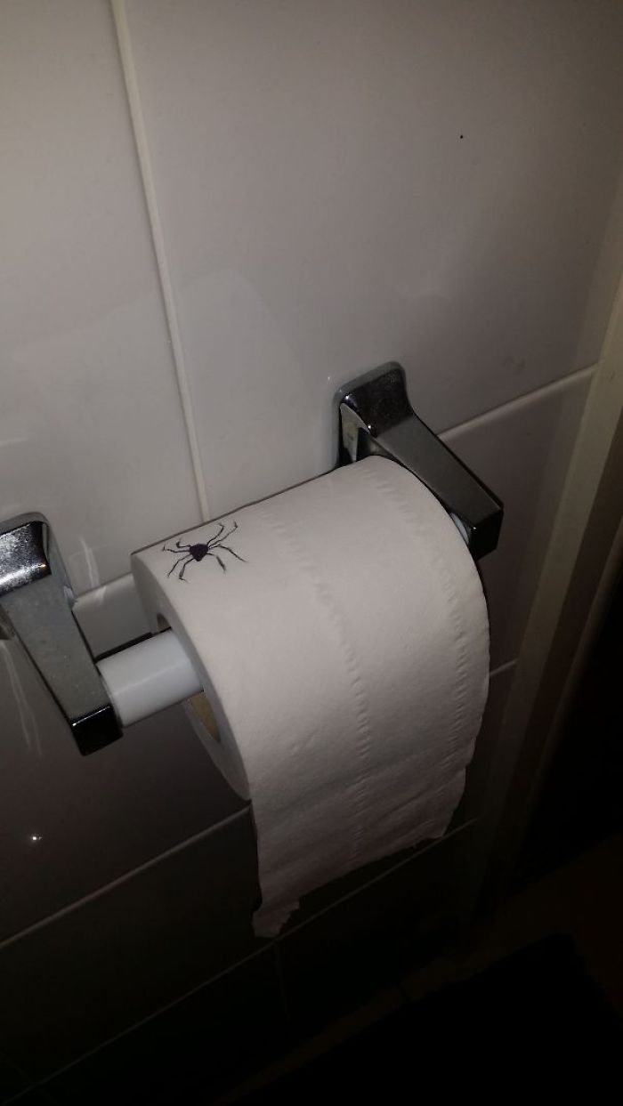 Toilet Roll Spider