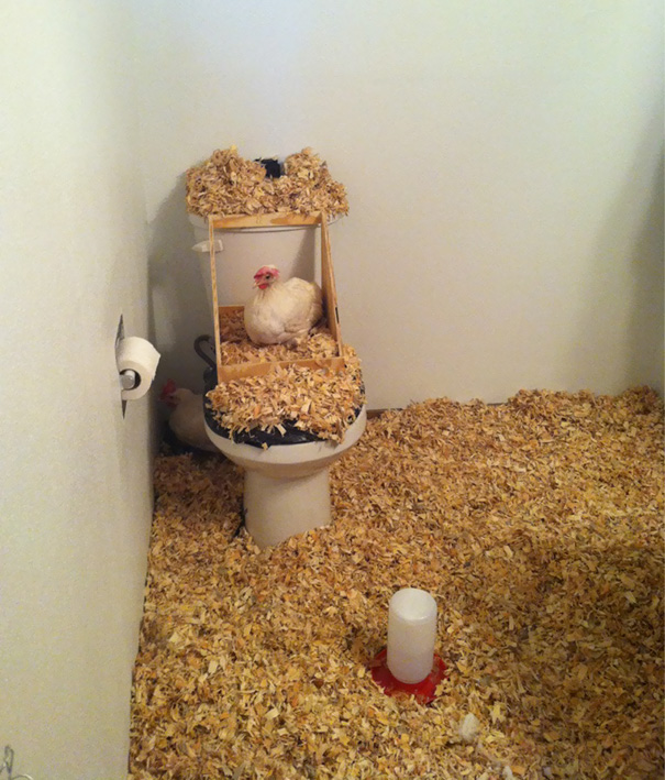 For April Fools I Decided To Turn My Roommates Bathroom Into A Chicken Coop. We Live In An Apartment