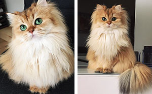 Meet Smoothie, The World's Most Photogenic Cat