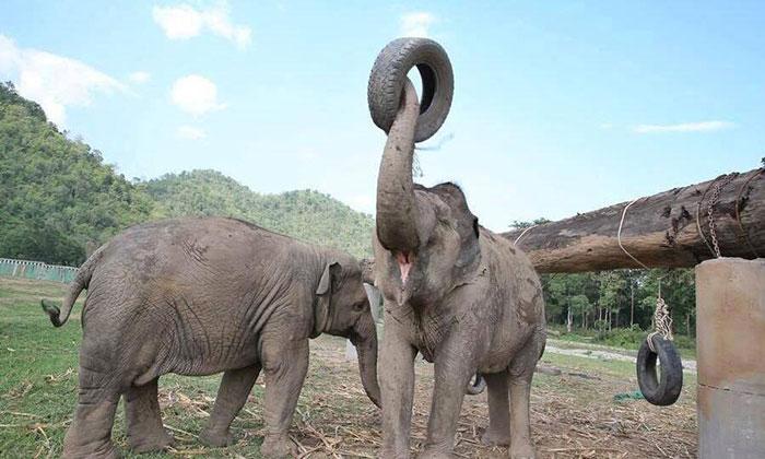 blind-elephant-cries-dead-friend-mae-perm-jokia-3