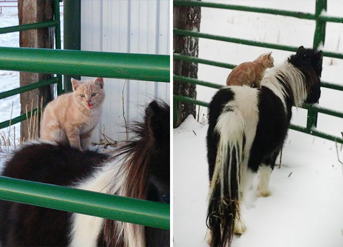 cat-rides-farm-animals-teton-snowfall-ranch-9