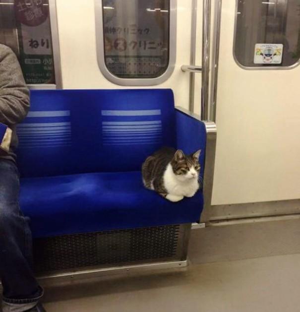 cat-rides-subway-seibu-ikebukuro-line-tokyo-1