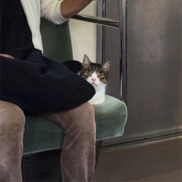 cat-rides-subway-seibu-ikebukuro-line-tokyo-13