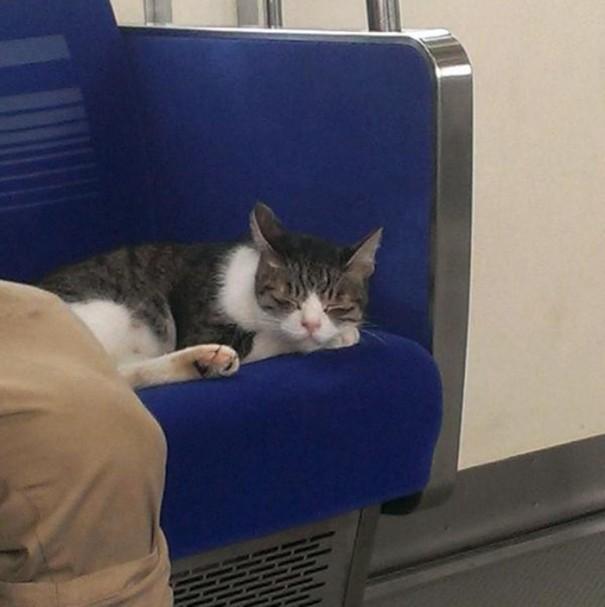 cat-rides-subway-seibu-ikebukuro-line-tokyo-5