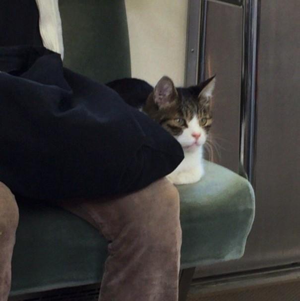 cat-rides-subway-seibu-ikebukuro-line-tokyo-7